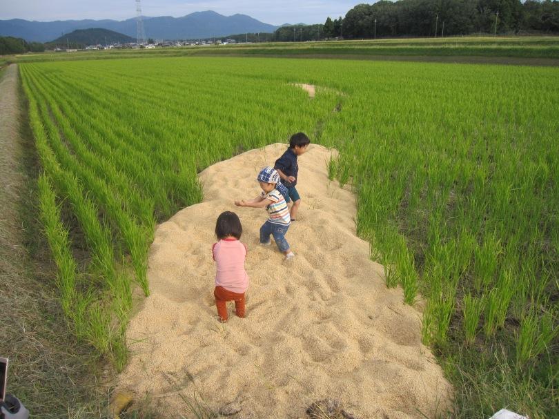 籾殻の上で遊ぶ子供たち
